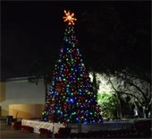 A lighted holiday tree with a star at the top.