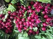 Red radishes on a bed of greens at The Gardens GreenMarket