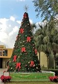 An outdoor Christmas tree with bows and ornaments