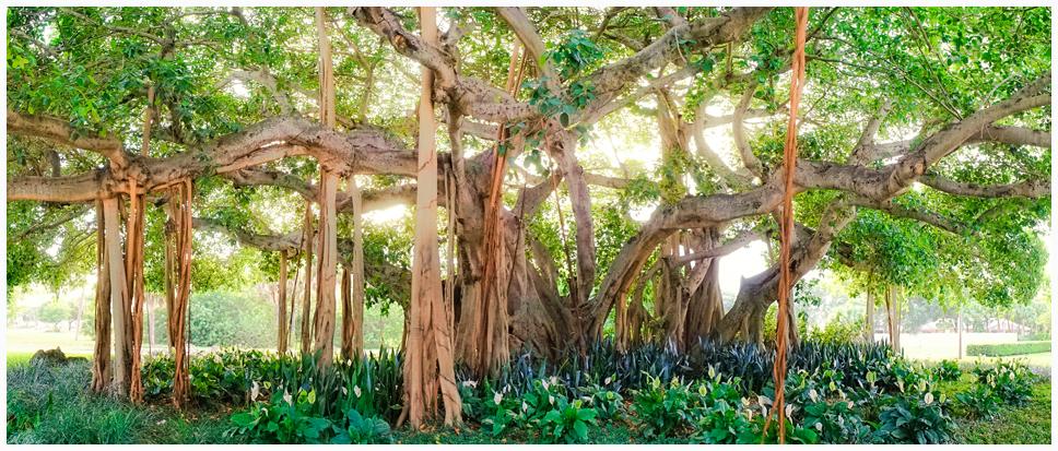 Palm Beach Gardens, FL - Official Website | Official Website