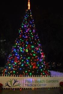 Christmas Tree at nighttime with colorful lights and star