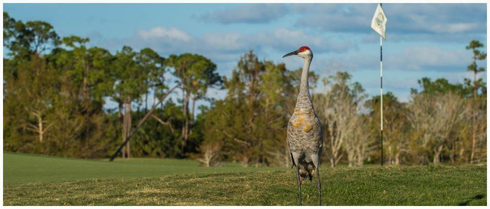 Sandhill Crane Golf Club Palm Beach Gardens Fl