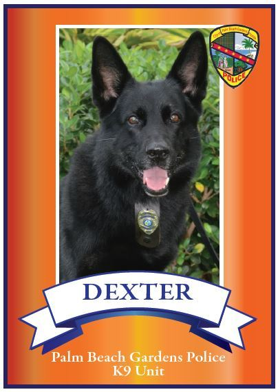 Image of K9 Dexter