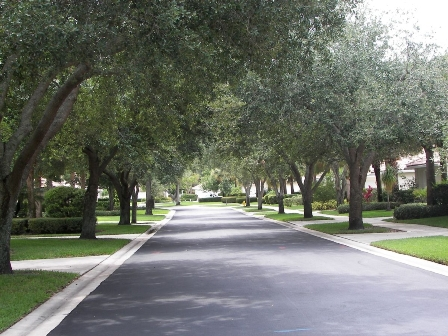 Beautiful Tree Lined Street