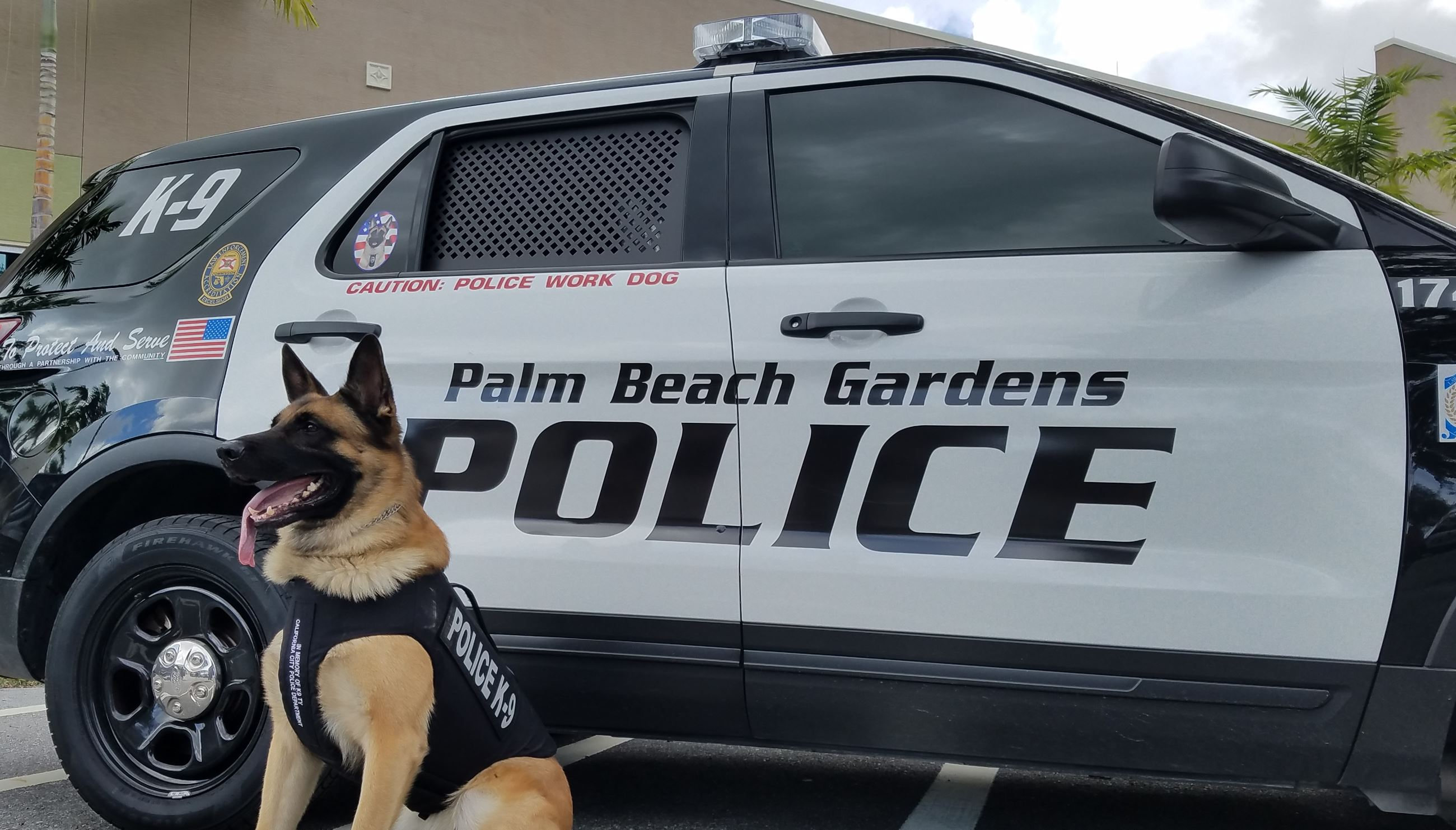 Picture of Police Canine
