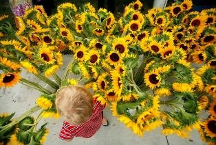 looking downward at sunflowers and a little boy